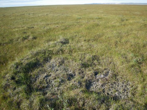 complex non-sorted circle partially vegetated partially active Franklin Bluffs, Alaska